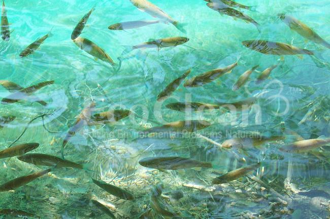 Vi sinh xử lý nước ao nuôi thủy sản