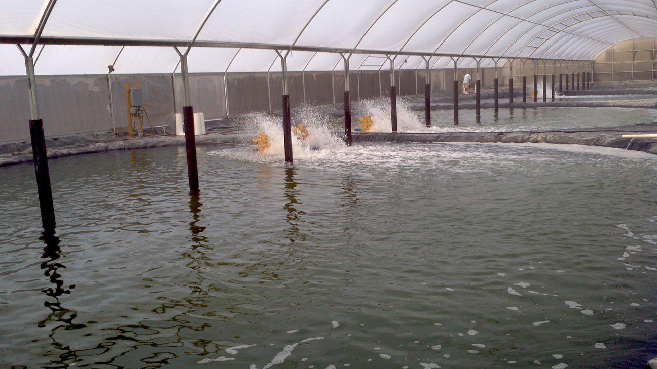 Công nghệ sinh học trong xử lý nước thải ao nuôi tôm